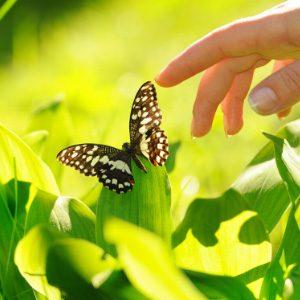 In het heldere groen zit een vlinder. Een hand reikt voorzichtig naar de vleugels.